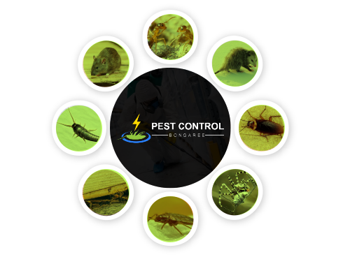 Pest Control Bongaree